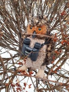 Stuffed owl sitting in bush with a pair of binoculars around his neck. Snow is in the backround.